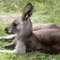 australien2011_062