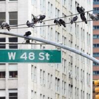 new-york2014_0057
